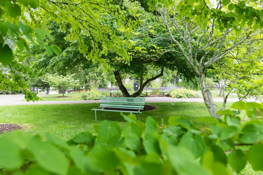 En parkbänk i en grönskande vy i arboretum.
