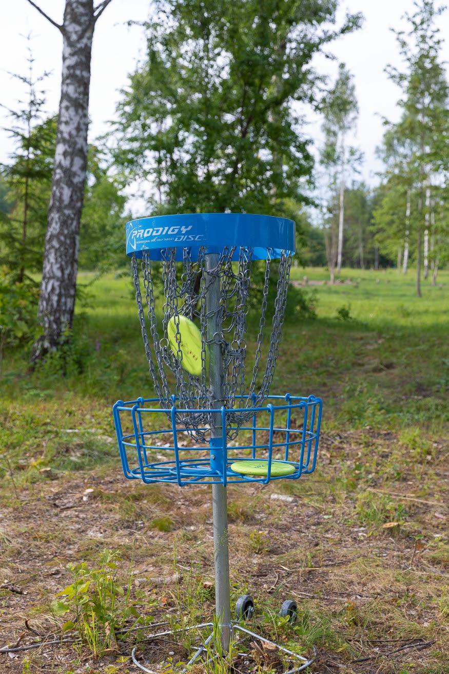en disc landar i discgolfkorgen - målet runt syns buskar och träd och hagmark.